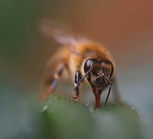 Honeybee by Al Williscroft