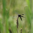 Dragonfly by Linda Busby