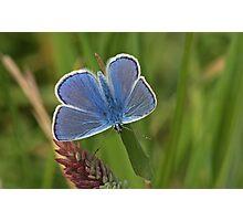Intens Blue Photographic Print
