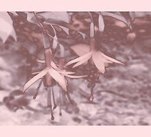 Pink Fuschias by sarnia2