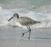 sandpiper strut by WonderlandGlass