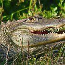 Florida gator by jozi1