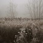 Reeds, Puxton Marsh, Kidderminster by Alex Drozd