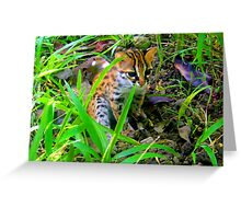 Philippine Leopard Greeting Card