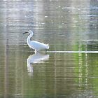 Sweet Egret by Donna Keevers Driver
