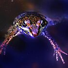 Frog Nebula by Debbie Pinard