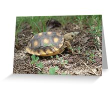 GOPHER TORTOISE HATCHLING Greeting Card