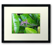 Juvenile Cuban Anole Lizard - Florida Framed Print