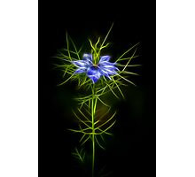 Love In A Mist Fractilous Style Photographic Print