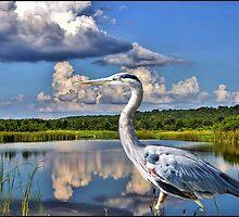 Heron in the Water by ✿✿ Bonita ✿✿ ђєℓℓσ
