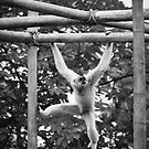 Hanging Around by Eric Scott Birdwhistell