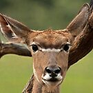 Lady Kudu by Mark Hughes