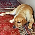 Wally on Persian Rug by Stephen Mitchell