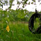 Dew Drop by BacktrailPhoto