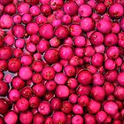 Australian Lilly Pilly Berries by Jane McDougall