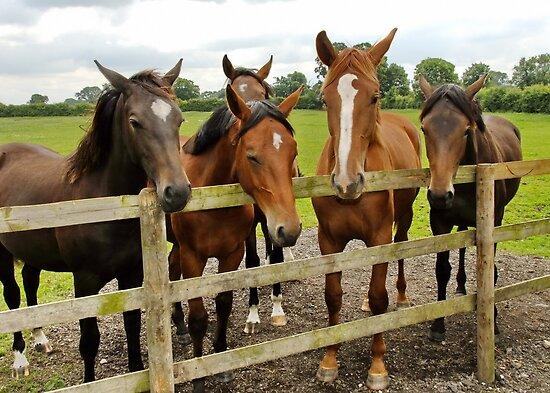 Horse Friends by AnnDixon