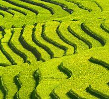 Rice Terrace2. by bulljup