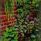 Garden Overcast by Scott Mitchell