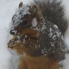 """Squirrel In Snow"" by dfrahm"