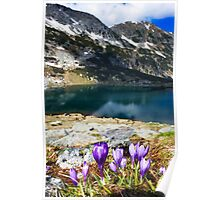 wild violet flower on the mountain Poster
