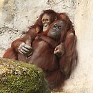 Orangutans in Love  by mhm710