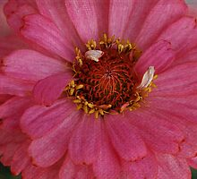 On The Pink Side by Deborah  Benoit