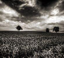 Weizen in der Schweiz by Luke Griffin