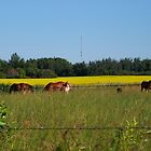 Horses in the Pasture by Steph Peesker