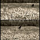 little black bird by leapdaybride