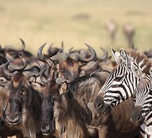 Stand out in a crowd by John Banks