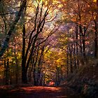Deep In The Woods by DaraD