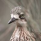 Peek-a-boo ... Bush Stone-curlew by Kerryn Ryan, Mosaic Avenues
