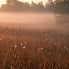 Foggy Stony Creek Park by Bill Spengler