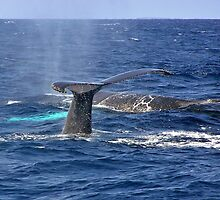 Humpbacks by Leon Heyns