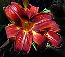 Day Lily by Graeme  Hyde