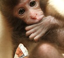 Baby Monkey by Honourable  Memories