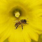 Bee on a daffodil flower by Linda Fury