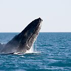 Breaching Whale by Mary Broome