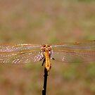 Dragonfly by KatrinKirieshka