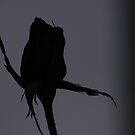 The evening dance - Silhouette by Karue
