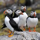 Puffin Group by Rachel Slater