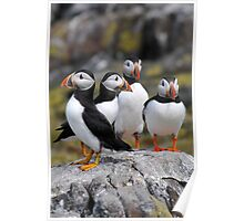 Puffin Group Poster