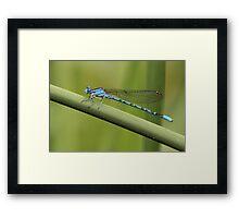 Blue Bamboo Framed Print