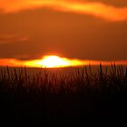 Cornfield Reflecting Silhouette(Enlarging is the only way to see this)  by ©Marcelle Raphael / Southern Belle Studios