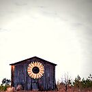 Sunflower on Rural Building by Lauren Neely
