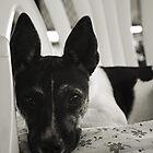 A Dog's Life by Anthony Superina