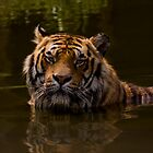 Bath Time For Tigger by Jeff Weymier