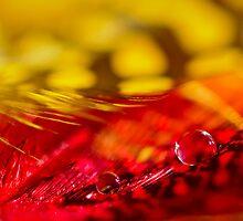 Sliding down on a red eye-lash... by Christine Kapler