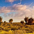 Grass Trees by aabzimaging