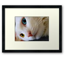 Did I Hear the Dinner Bell?? Framed Print